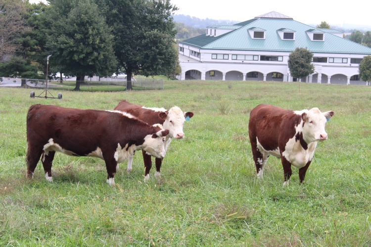 College of the Ozarks Farm